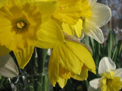 20080409_spring_flowers_buds_37.JPG