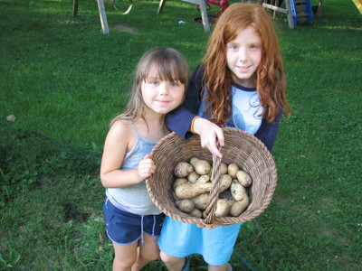 20090813_potato harvest_1.JPG