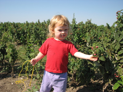 20070904_picking_raspberries_1.JPG