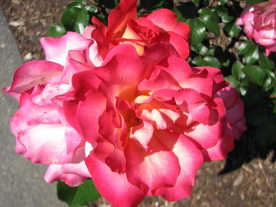 20080617_botanic_garden_036.JPG
