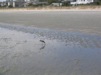 20060224_beach_hilton_head_11.JPG